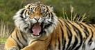 indonesian-fauna-tahu1_thumb.jpg