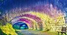 Terowongan-pohon-tahu1_thumb.jpg