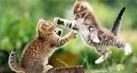 animals-tahu1_thumb.jpg