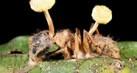scary-parasite-tahu1_thumb.jpg