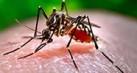 serangga-mematikan-tahu1_thumb.jpg