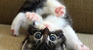 10 Jenis Kucing Paling Popular Di Dunia