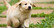 10 Jenis Anjing Paling Popular Di Dunia