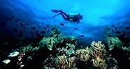 10 Tempat Terbaik Untuk Diving Dan Snorkeling Di Indonesia