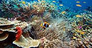 10 Ikan Terindah di Dunia
