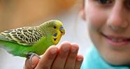 10 Hewan Peliharaan Yang Baik Untuk Anak-Anak
