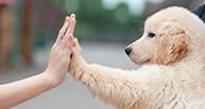 10 Hal Yang Perlu Dipertimbangkan Sebelum Memelihara Hewan