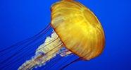 10 Hewan Prasejarah Yang Masih Hidup Sampai Sekarang