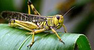 10 Serangga Paling Menyebalkan Yang Ada Di Sekitar Kita