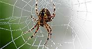 10 Laba-laba Terbesar di Dunia