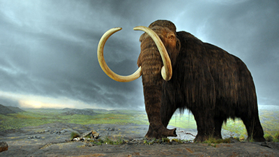 Mammoth Woolly