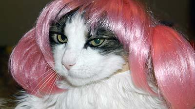 cat wig