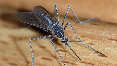 hewan mematikan nyamuk