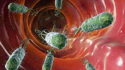 bowel bacteria