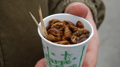 silkworm pupa