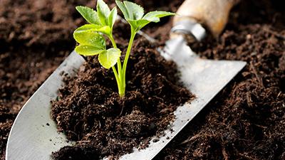 soil nutrients