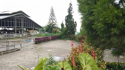 Cibubur Garden Dairy