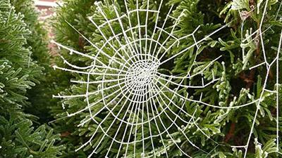 Cobweb Christmas,