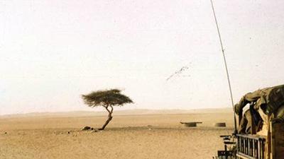 Tree of Ténéré