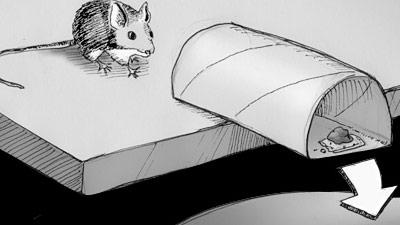 Jebakan Tikus Sederhana