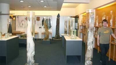 The Icelandic Phallological Museum, salah satu museum paling aneh namun unik di dunia