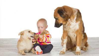 Tidak hanya manusia anjing juga dapat cemburu atas sesamanya