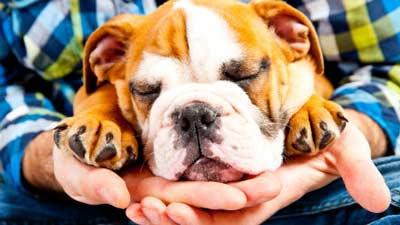 Anjing dapat mencium apakah majikannya sedang sakit atau tidak