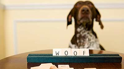 Anjing dapat dilatih memahami kata-kata hingga 250 kata