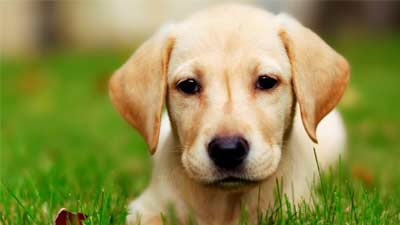 10 fakta yang tidak Anda tahu Mengenai Anjing Peliharaan Anda