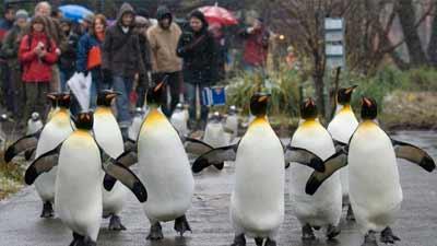 Basel Zoo