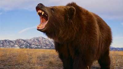 cara mengantisipasi serangan beruang di alam liar
