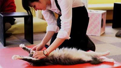 Calico Cat Cafe, rasakan lucunya bermain bersama kucing selagi makan