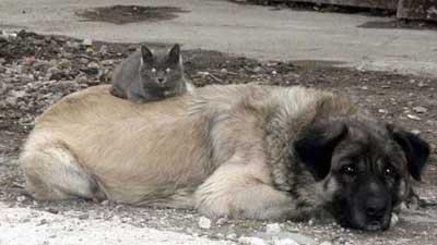 Cotton si Anjing dan Kucingnya
