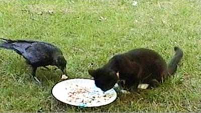 Gagak Moses dan Anak Kucing Cassie