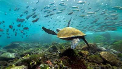 Pulau Galapagos adalah salah satu tempat paling terancam di dunia