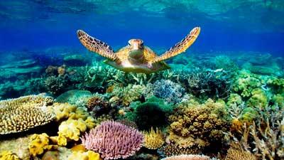 Great Barrier Reef adalah terumbu karang yang terancam punah karena polusi air dan pemutihan karang