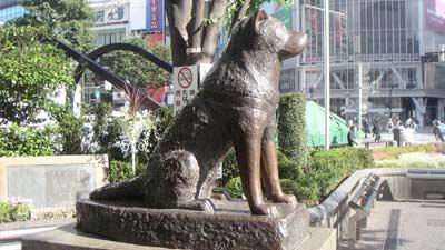 Hachiko, anjing lambang kesetiaan yang patungnya masih dapat dilihat di Jepang depan Stasiun Shibuya, Tokyo