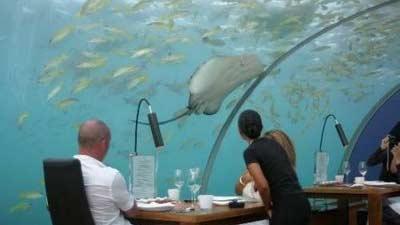 Di Maldives tepatnya Ithaa Undersea Restaurant, santaplah hidangan Anda sembari menikmati pemandangan bawah laut