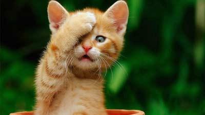 Kucing yang pelupa ternyata penyebab mengapa kita tidak abadi
