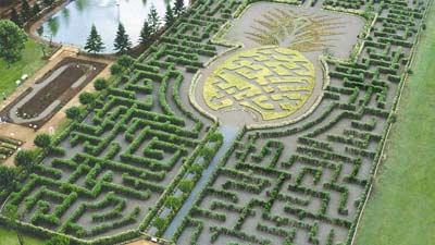 Inilah labirin terbesar di dunia yakni Pineapple Garden Maze