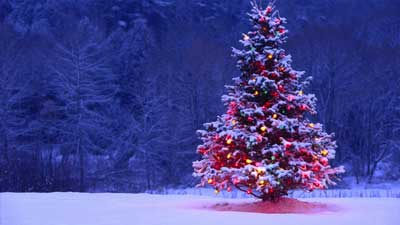Oleh indahnya cahaya bintang di antara cabang-cabang pohon cemara