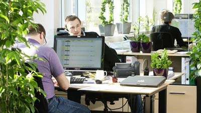 Diletakkannya tanaman hijau dalam sebuah kantor penting untuk produktivitas