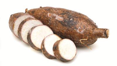 Akar cassava yang telah dipotong
