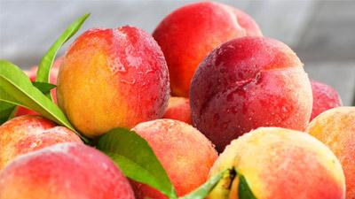 Beberapa buah persik yang terlihat masih sangat segar