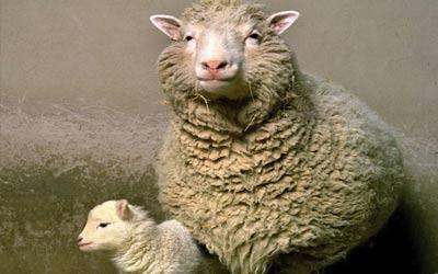 Dolly si domba kloning