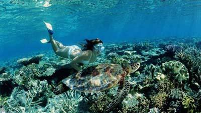 Great Barrier Reef memang terkenal di kalangan backpacker single termasuk untuk wanita