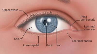 Kelopak mata ketiga pada manusia atau Plica Semilunaris