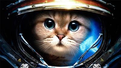 Kucing luar angkasa