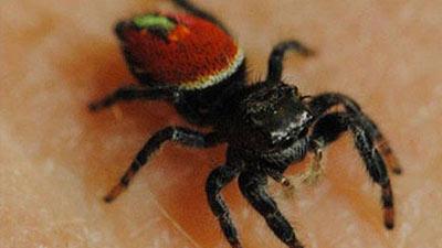 Laba-laba di kulit