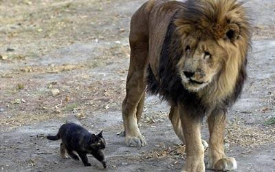 Si Singa Marjan dan kucing